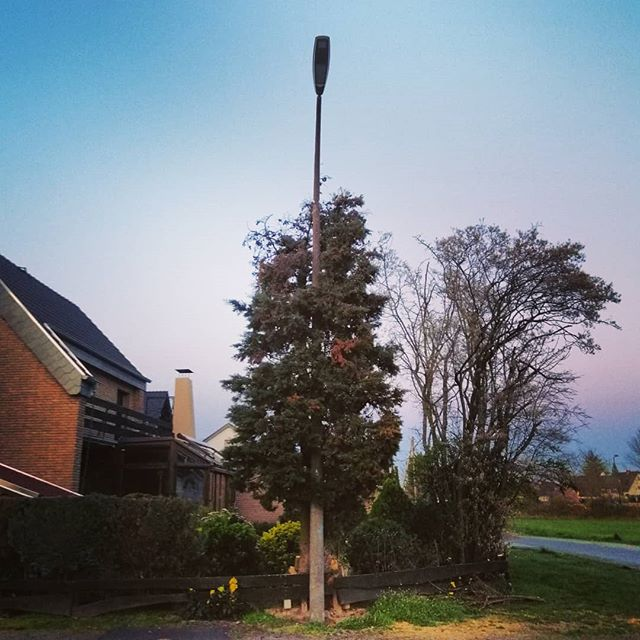 In times like these we need more positive things and thoughts. So, this is what I just saw while walking the dog. Don't know what was there first, tree or lamp, but I like how this tree sort of hugs the street lamp. #naturewins #staysafe #staystrong
